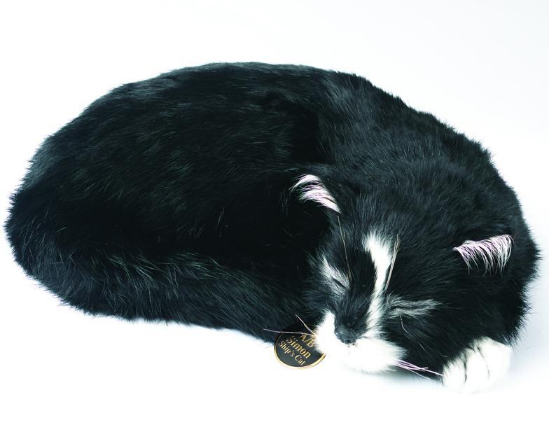 Jacky Cat